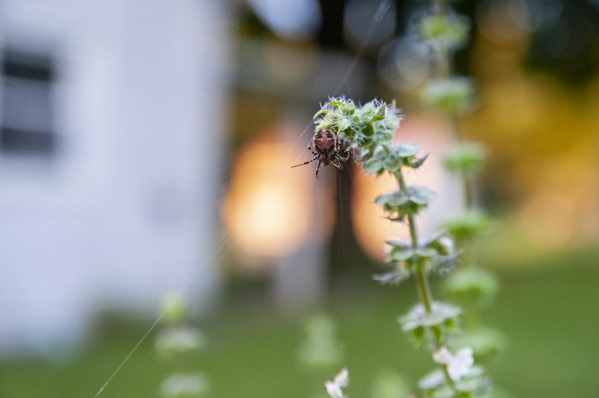 spider-6017.jpg
