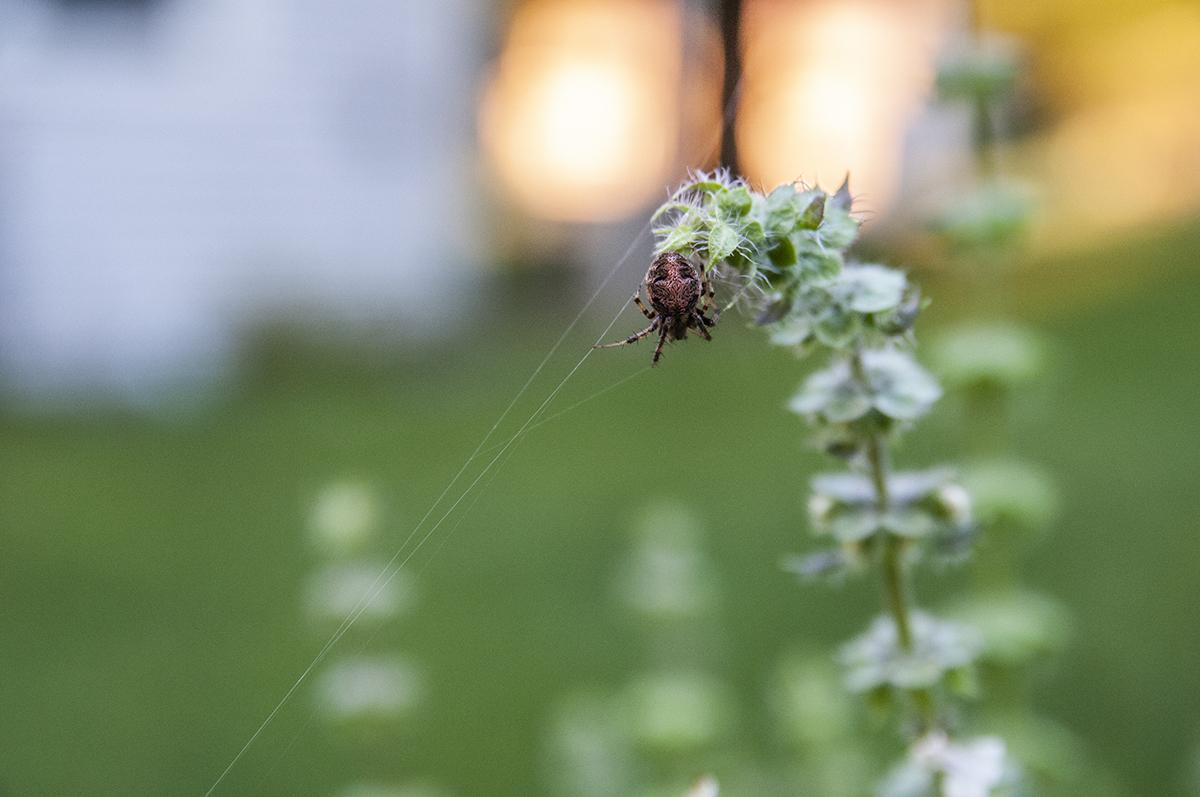 spider-6015.jpg