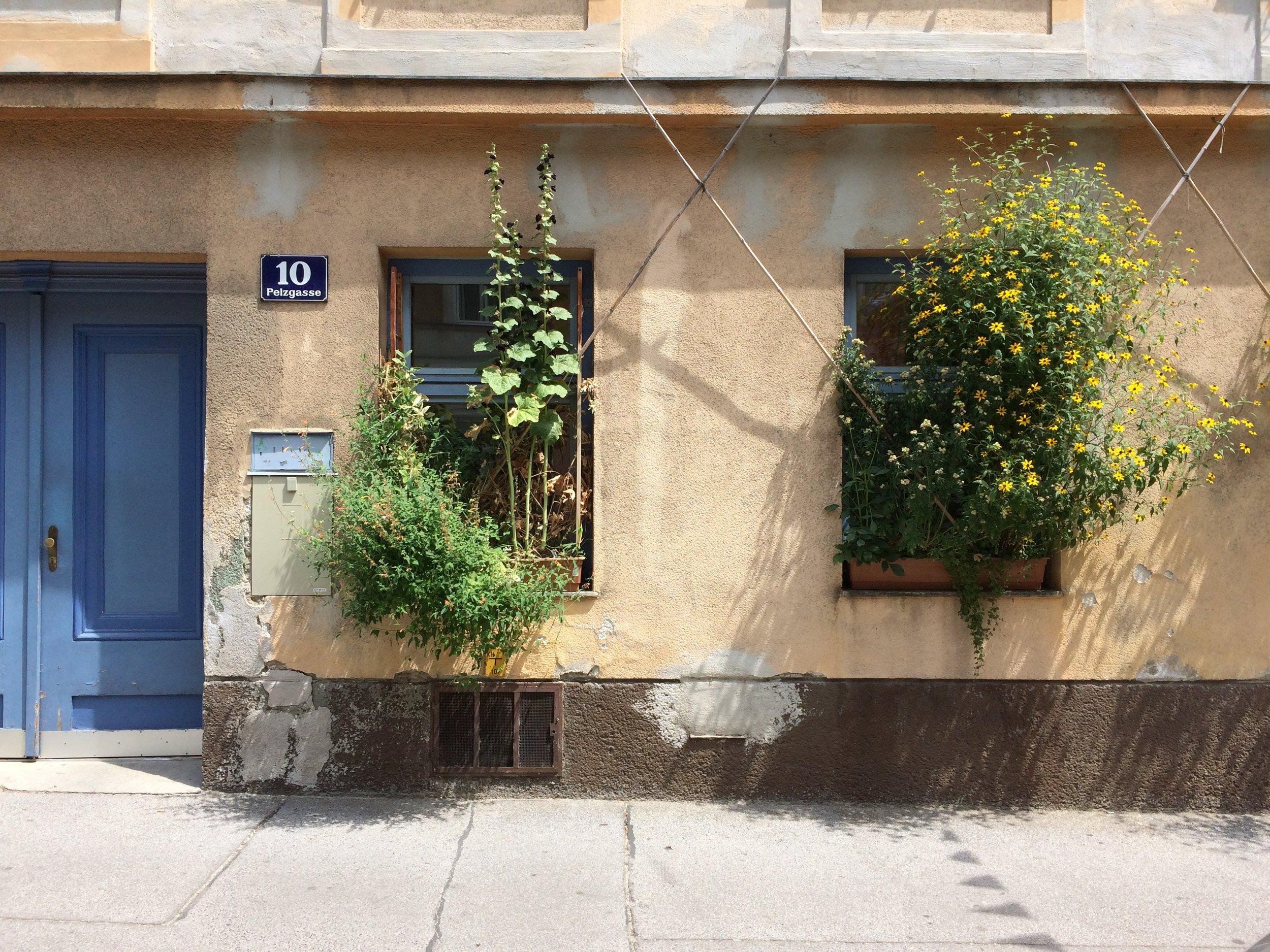 Ultimate window sill gardening. 15th district, Vienna