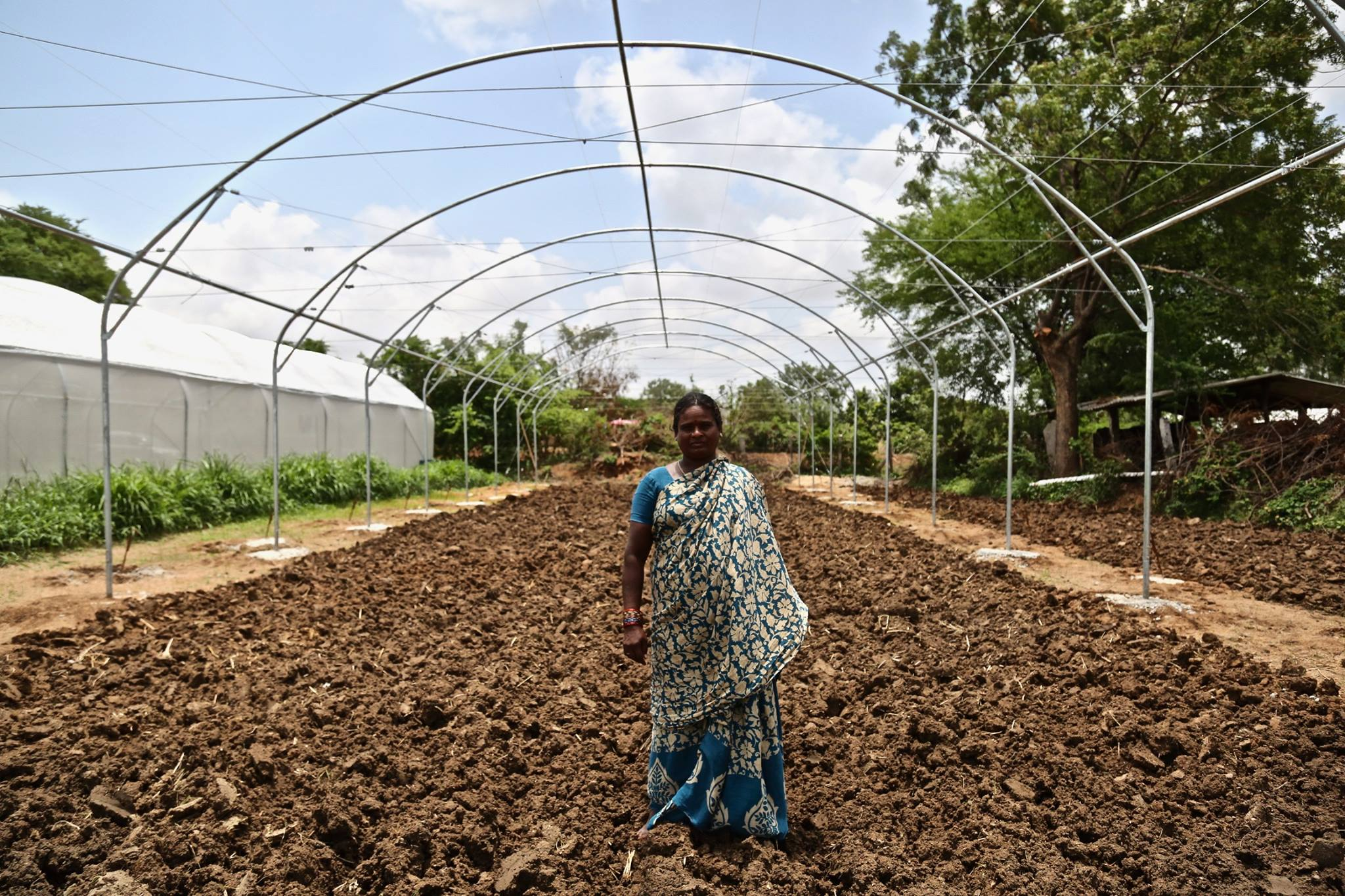 New farmer Saraswati Appala signed up for a Kheyti greenhouse after seeing how successful her brother-in-law's harvest was in the neighboring greenhouse.