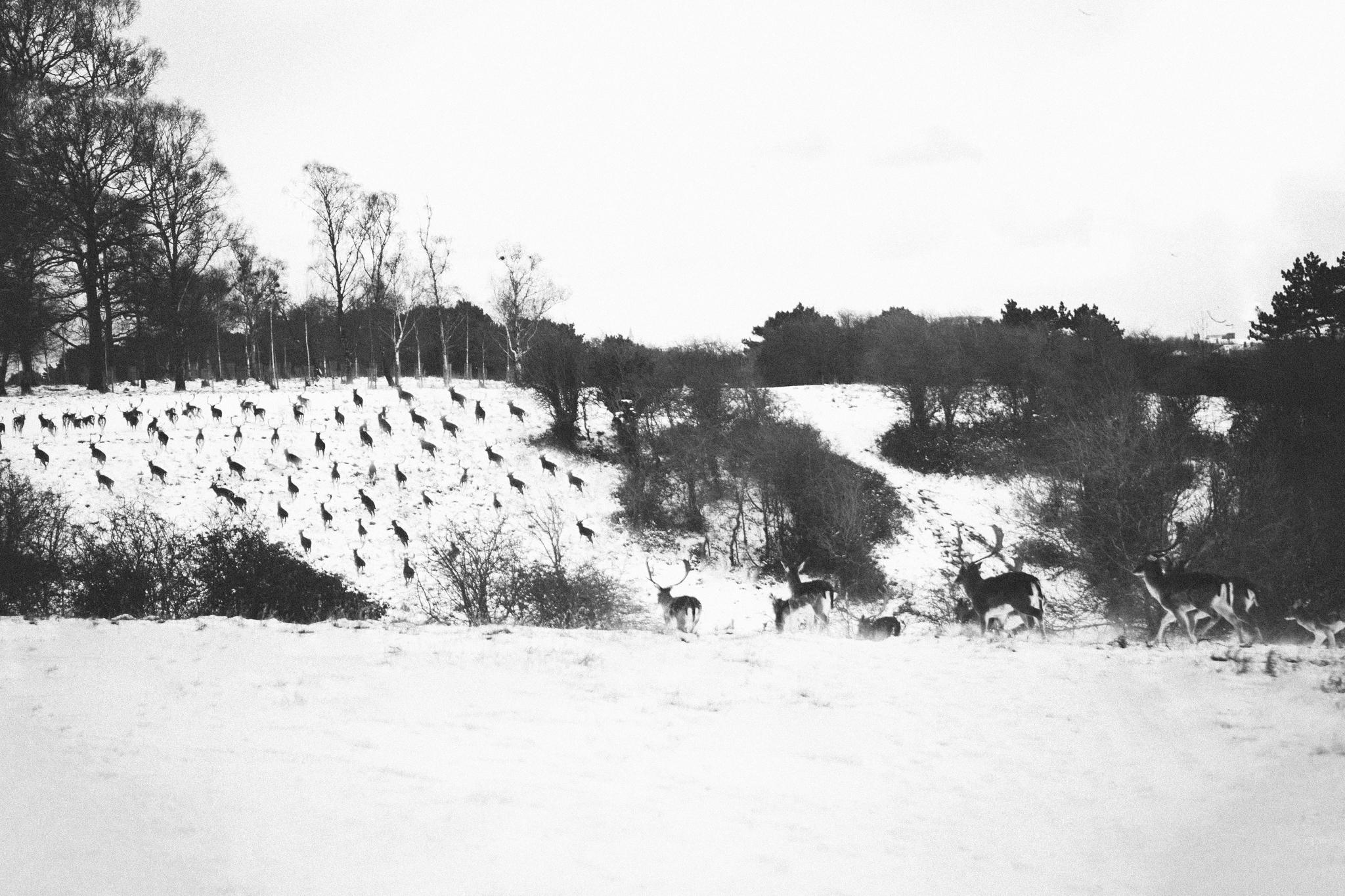 snow (22 of 31).jpg