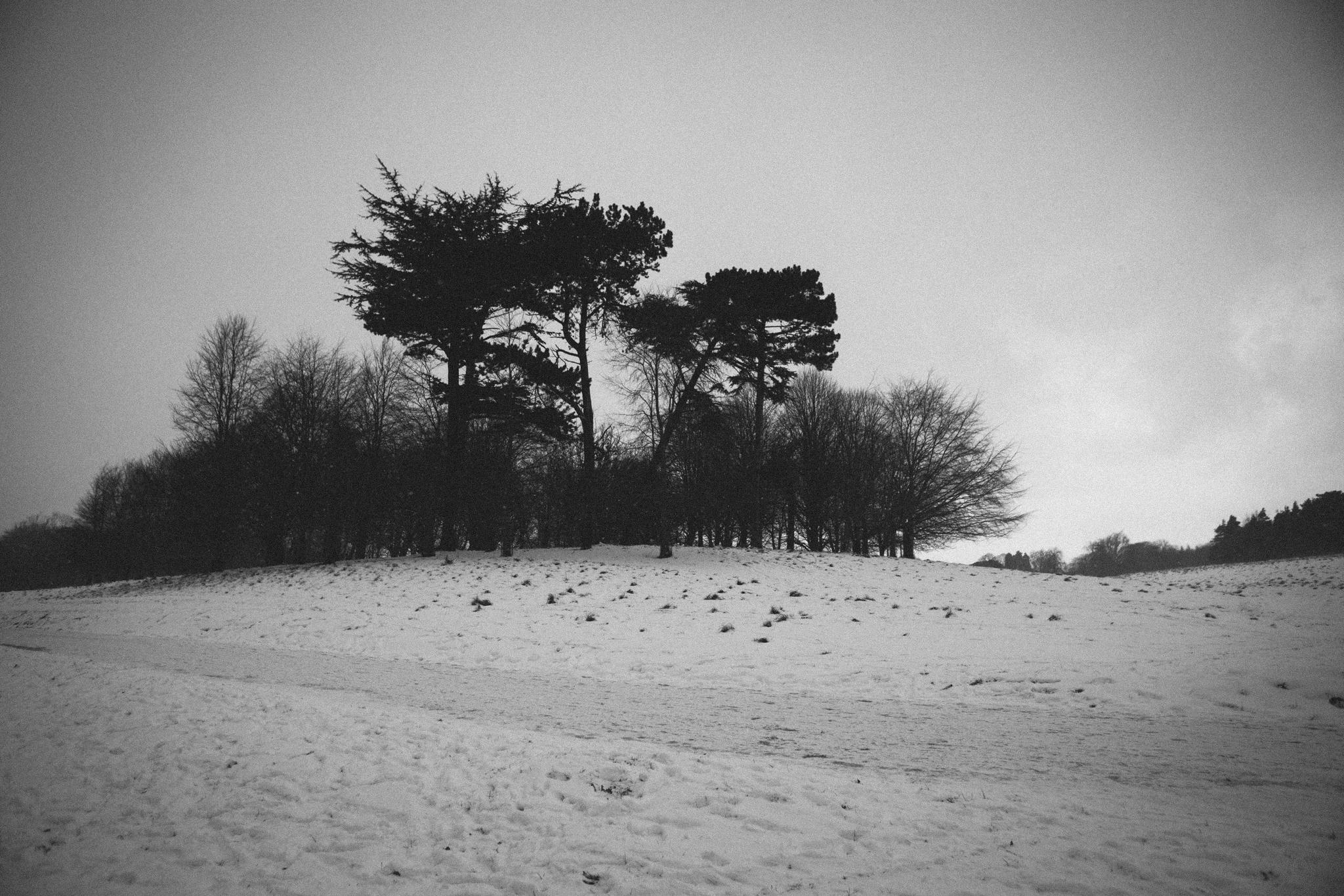 snow (28 of 31).jpg