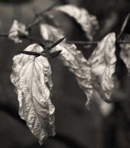 WitheredLeafOnBranch