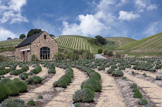 Niner Wine Estate
