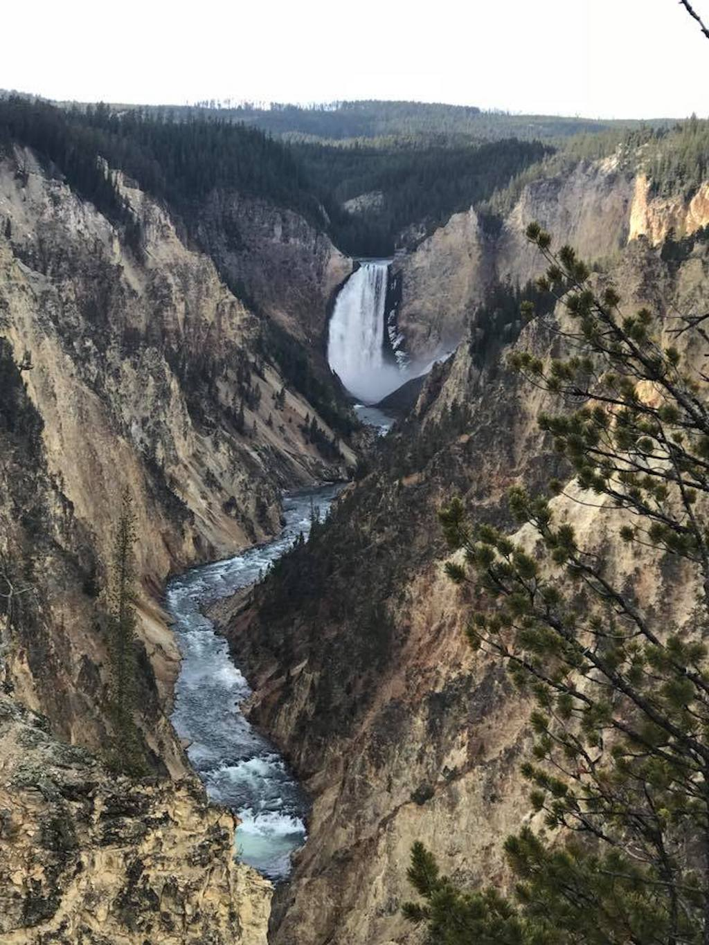 lower yellowstone falls.jpg