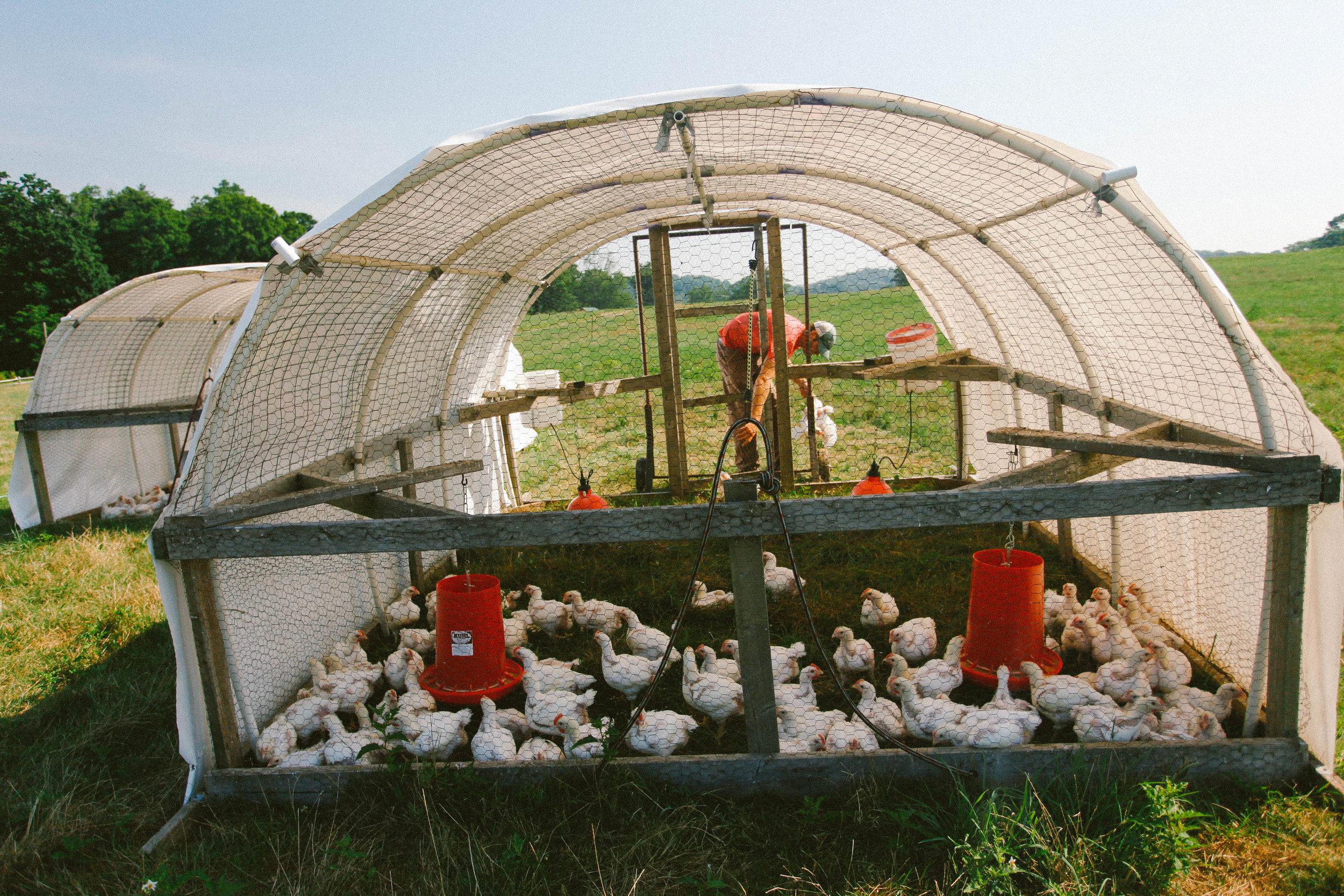 C-Kodak Porta 400++ hens.jpeg