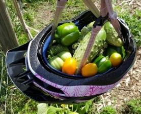 Helmet_basket.jpg