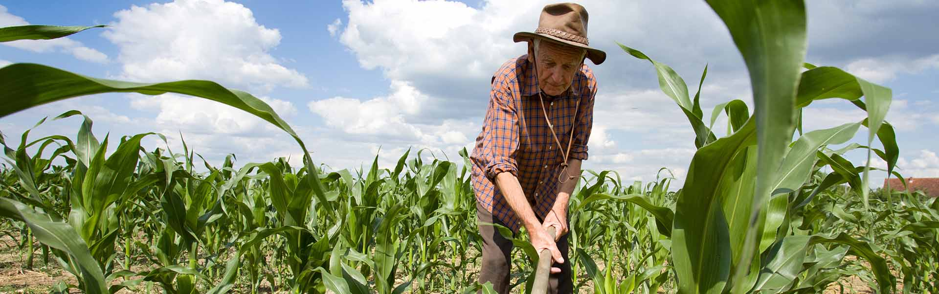 crops-1920x600.jpg