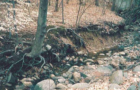 Before Erosion Control