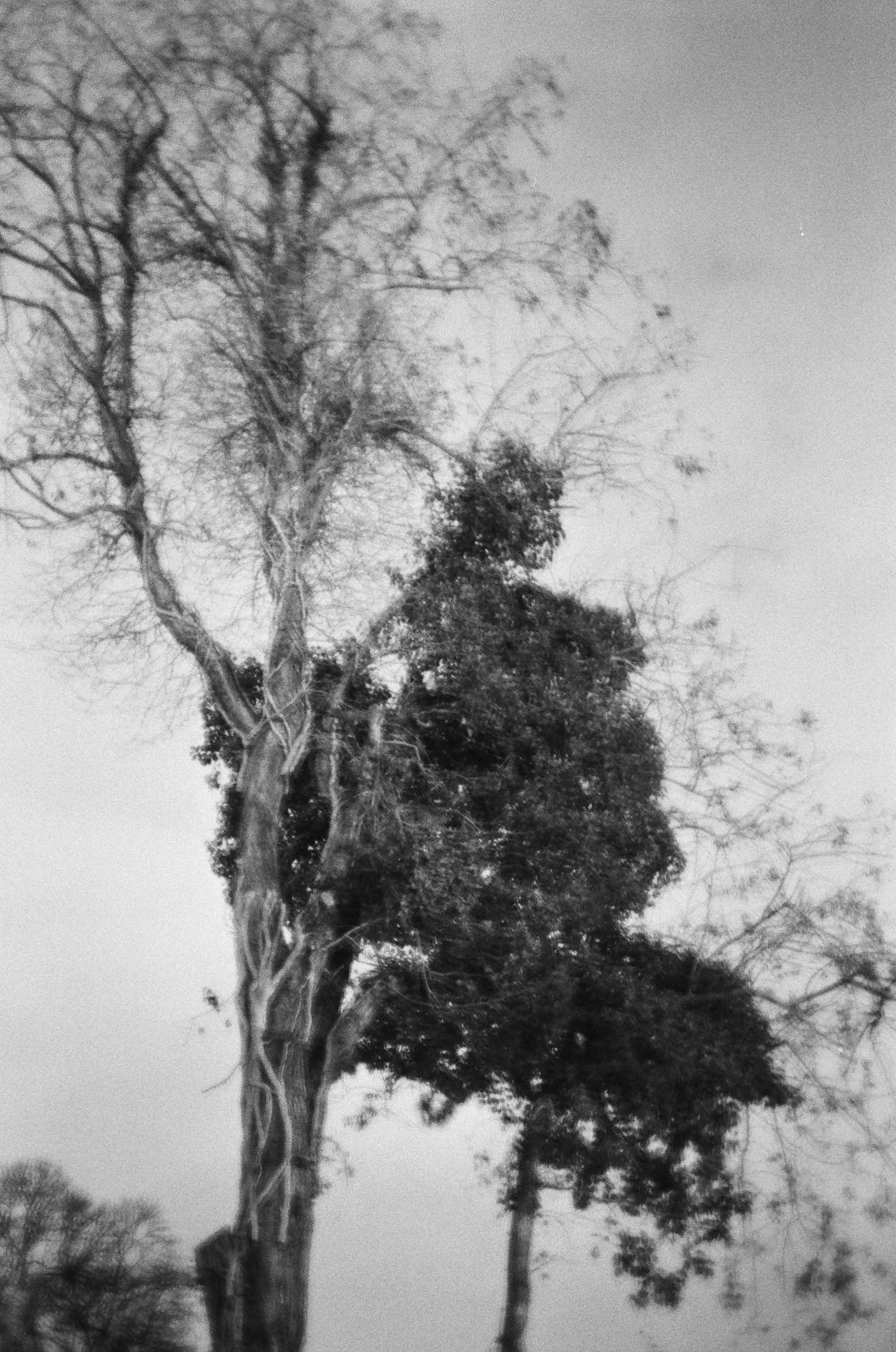 ChristosVourlis_photography_CVHAIR_CVDIARY_personal diary__film_35mm_11630005.JPG