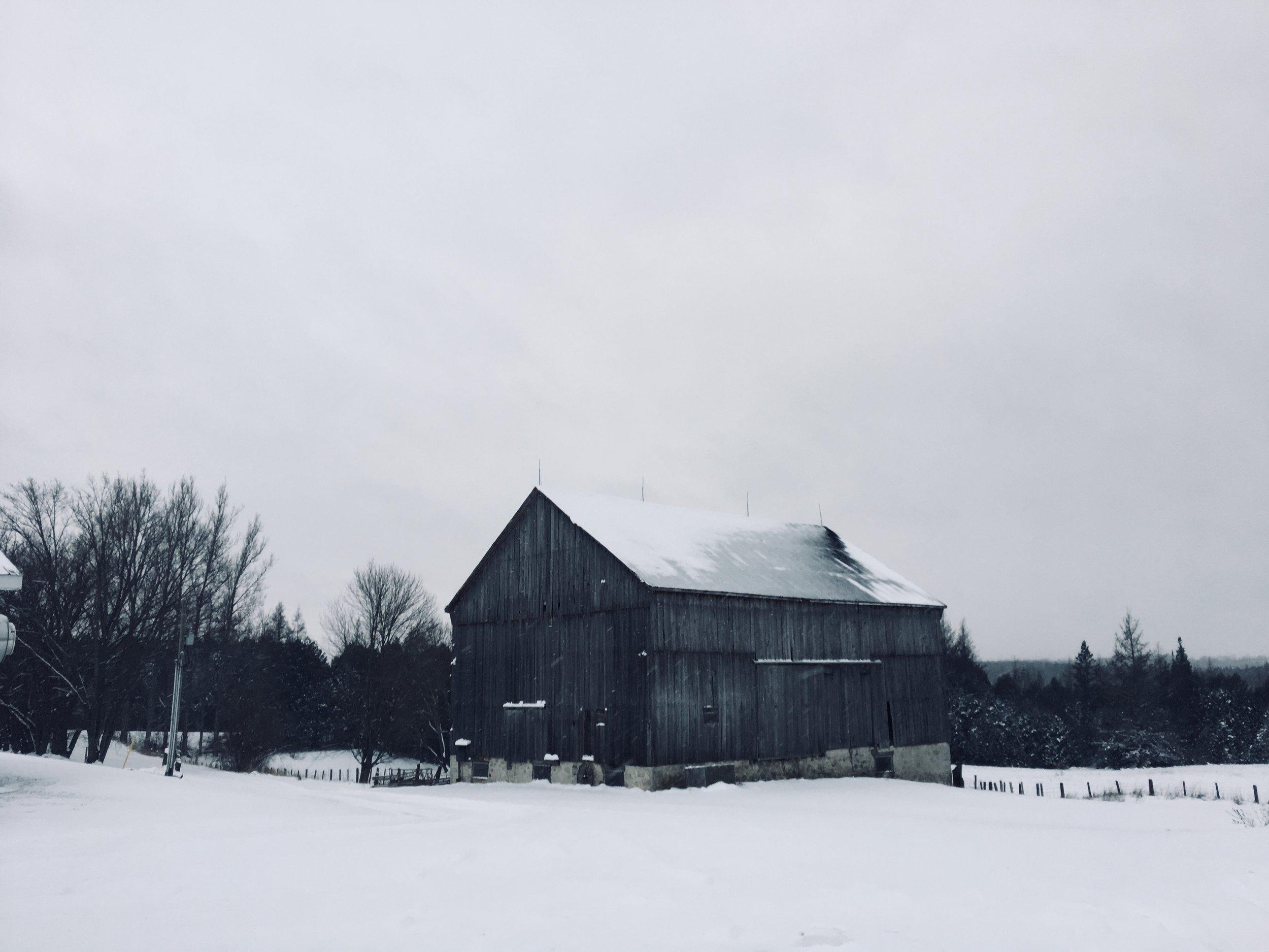 Koigu Farm