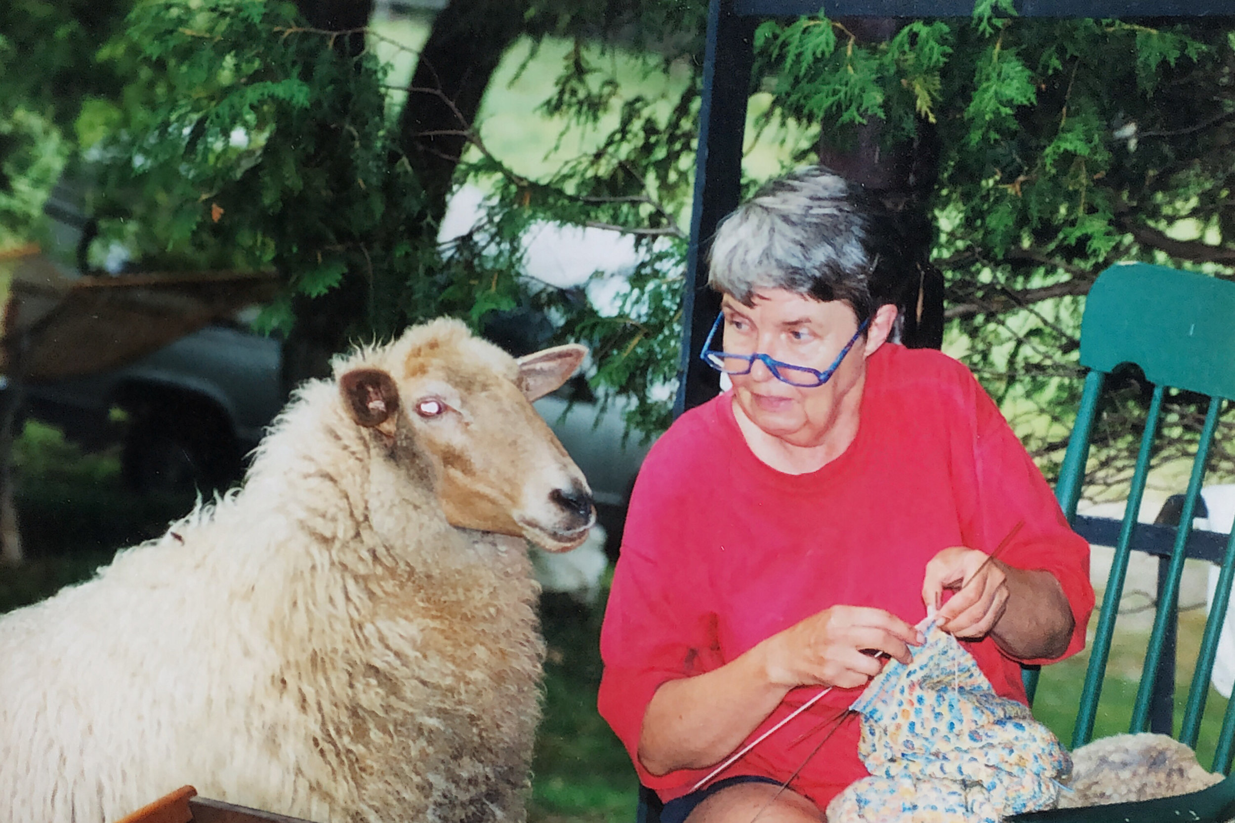 Sheep Maie IMG_50CEC26724E9-1.jpeg