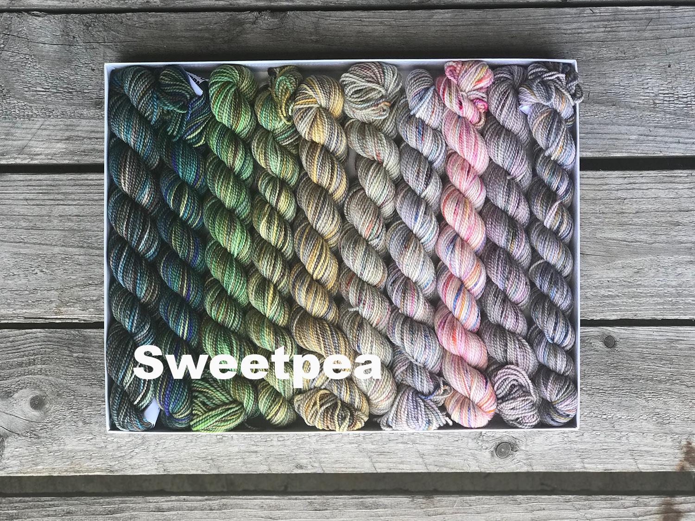 sweet pea 300IMG_5061.jpg