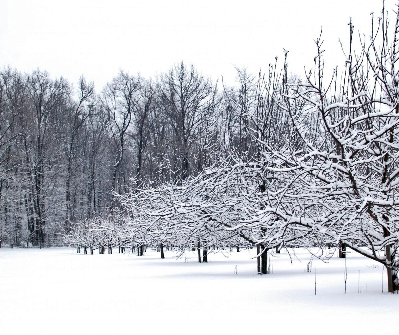 LV-SnowMuse.jpg