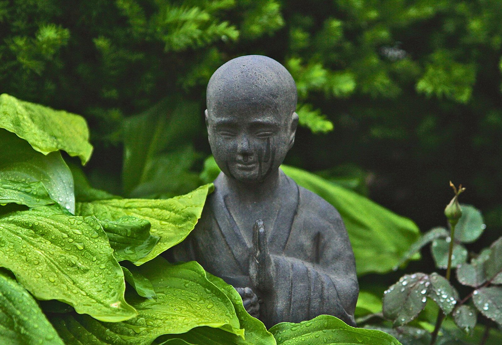 BuddahForest.jpg