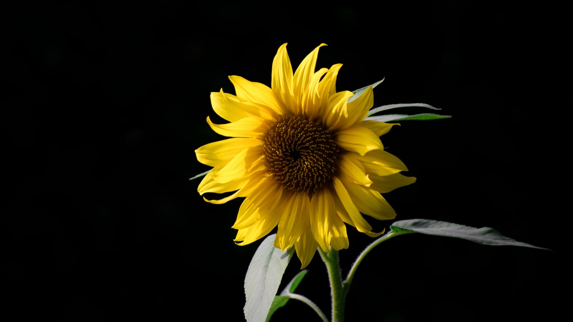 """""""Keep your face to the sunshine and you cannot see the shadows. That's what sunflowers do.""""  ~Helen Keller"""