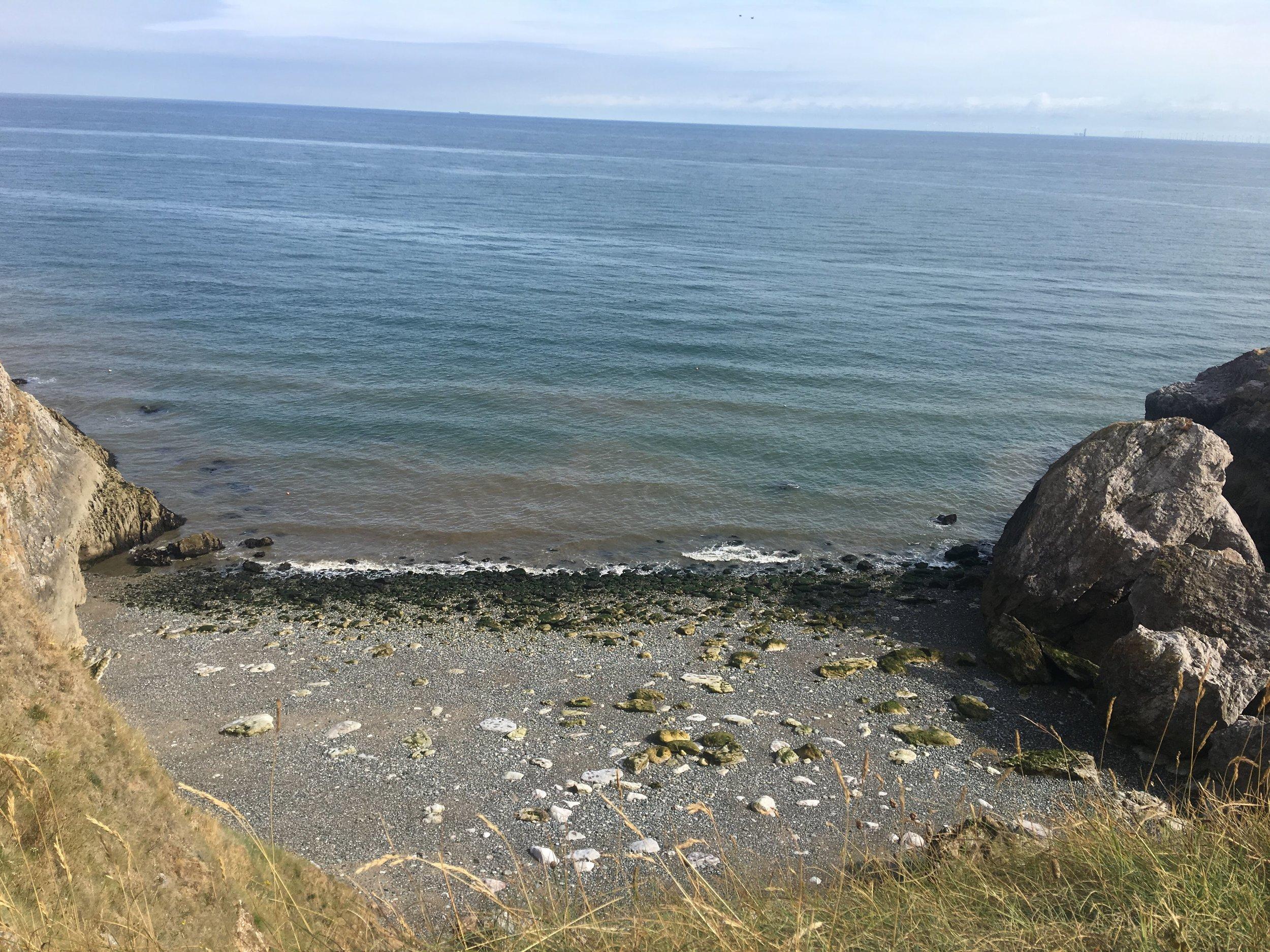 Watched seals play in Llandudno