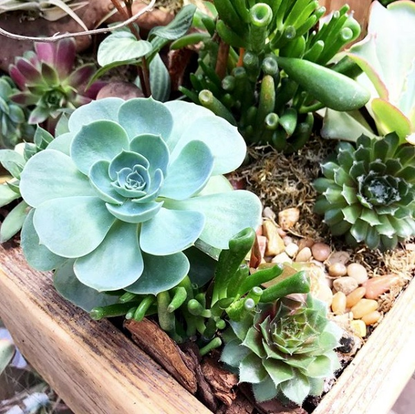 SucculentPlanter.jpeg