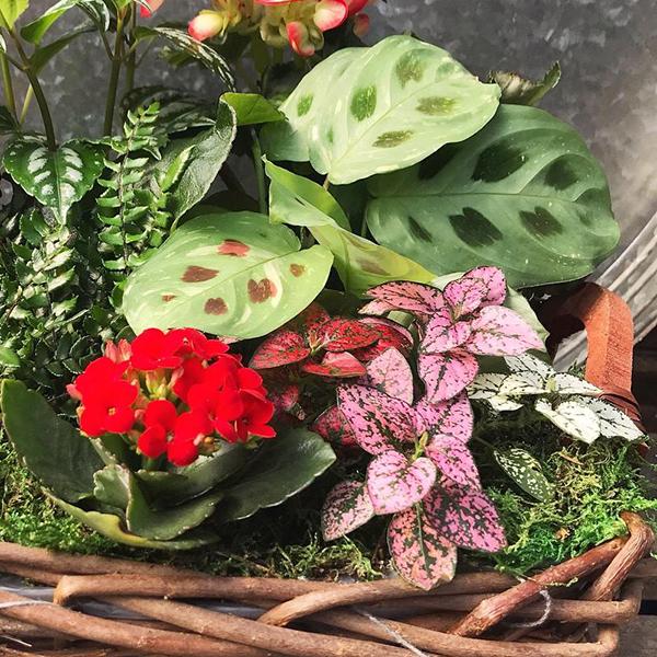 BloomingHouseplantBasket.jpg