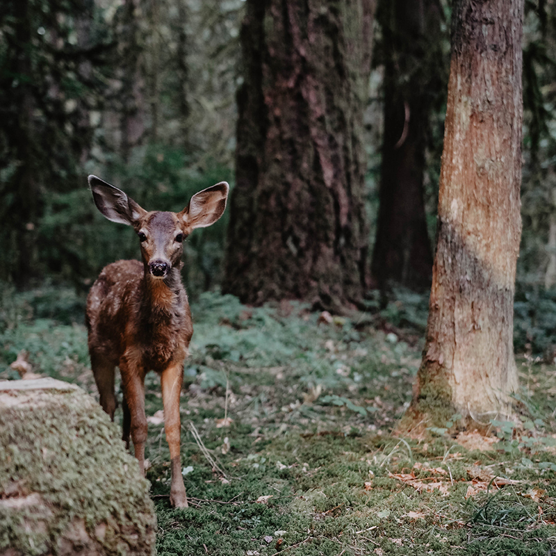David-Izquierdo-Deer.jpg