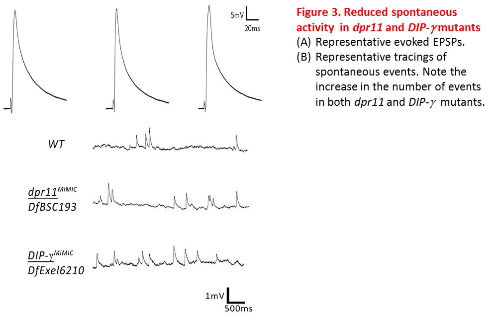 Fig3_PhysiologyV1.jpg