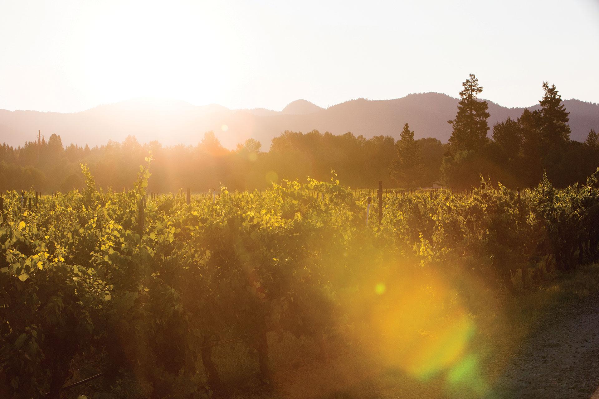 Bridgeview-Winery---Counterform-----00839.jpg