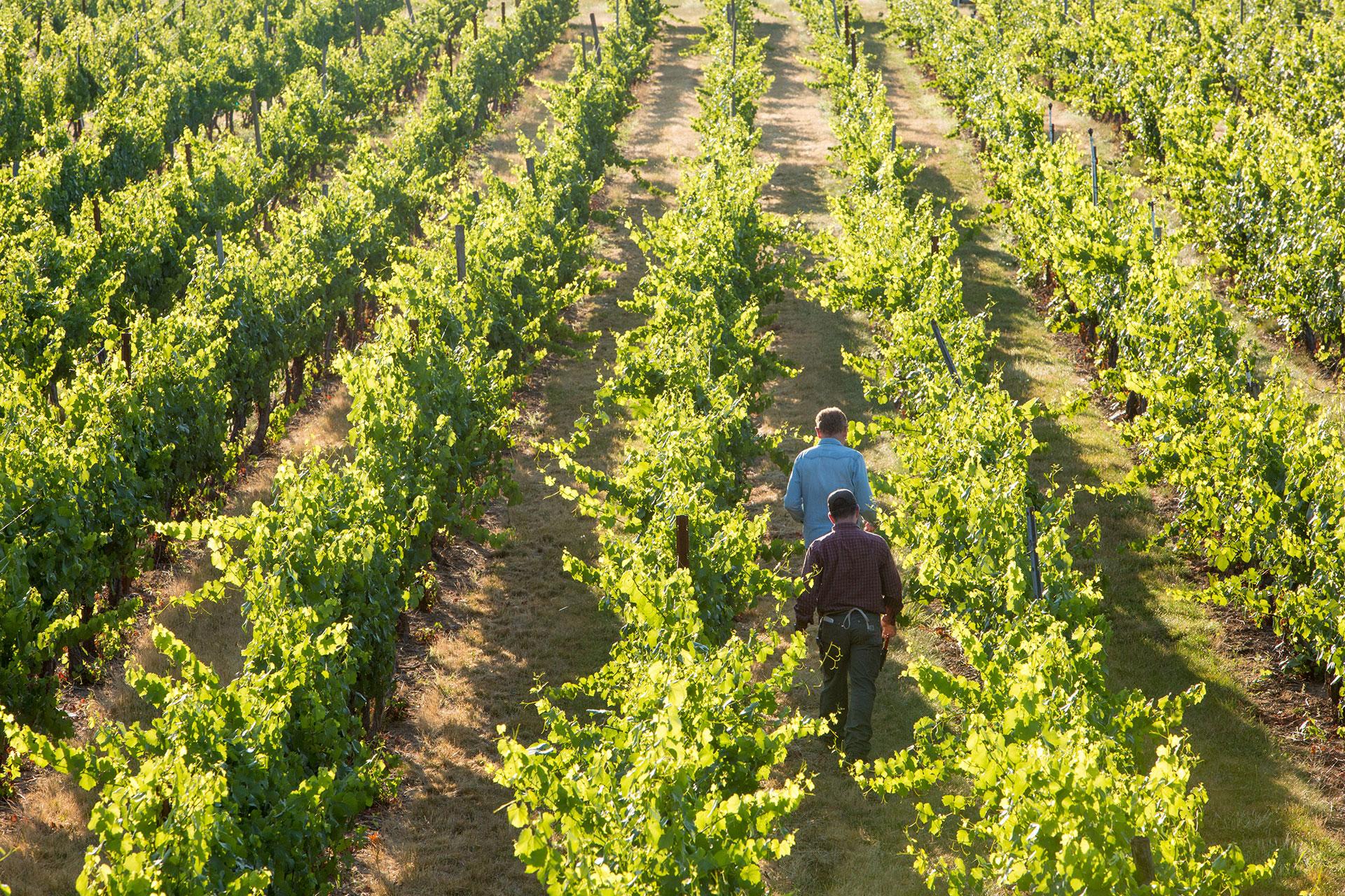 Bridgeview-Winery---Counterform-----01118.jpg