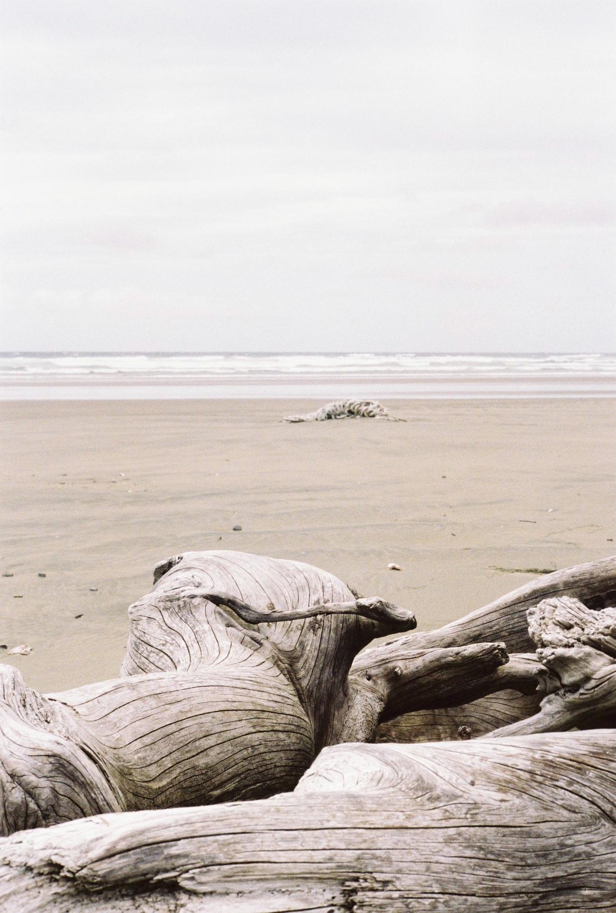 Beach log and rope.jpg