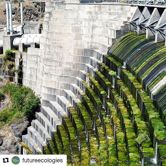 "Plugging the podcast once again! We've just dropped the first of a 2-part series on dams and dam removals, and I think it's pretty great. We've been getting some amazing stories from some incredible folks, layered together with music from dear friends, and I'm very proud of the result.  Head over to www.futureecologies.net/ to listen, or just search for Future Ecologies on your podcast service, and click episode ""FE1.9 - Swimming Upstream"". Give @futureecologies a follow too, why not?  This amazing photo is by Jeff Barnard, taken of the Copco 1 dam on the Klamath river, resplendent in a coat of salmon-smothering algae."