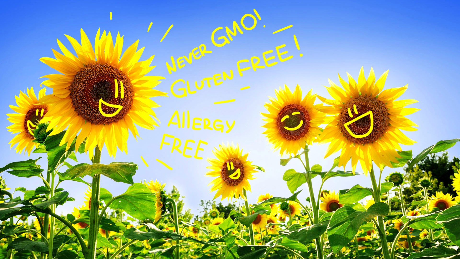 Sunflower Never GMO Gluten FREE Allergy FREE