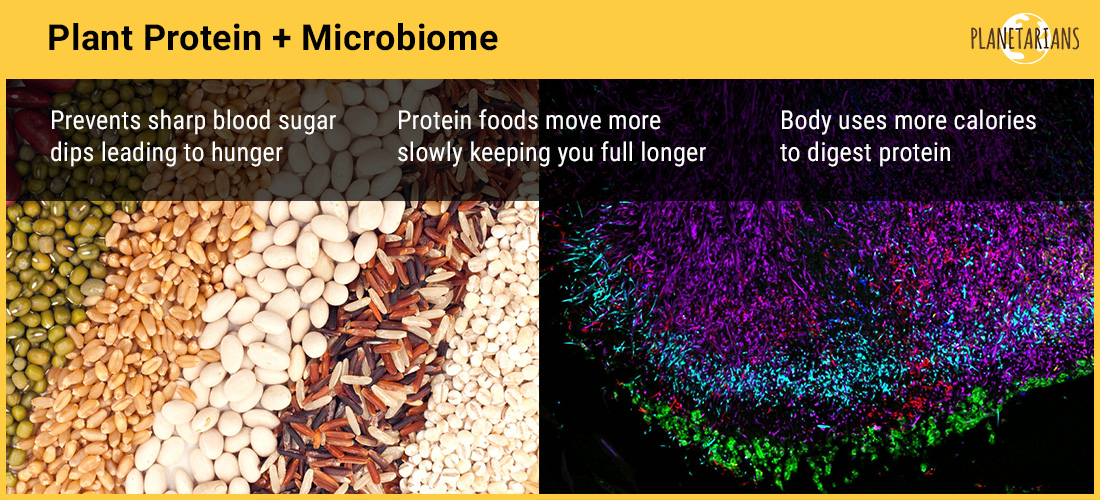 How Plant Protein Helps Microbiome (our 2nd immune system) - to fight diet related diseases