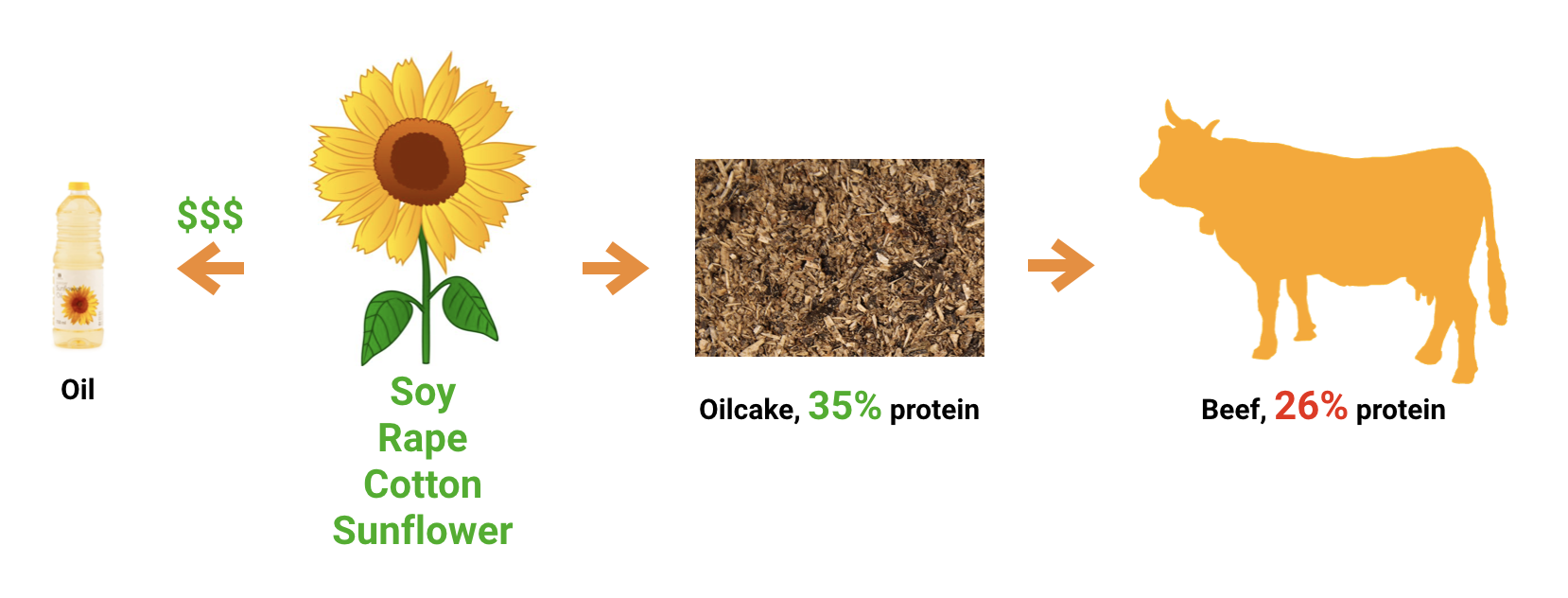 Sunflower oilcake to cattle.png