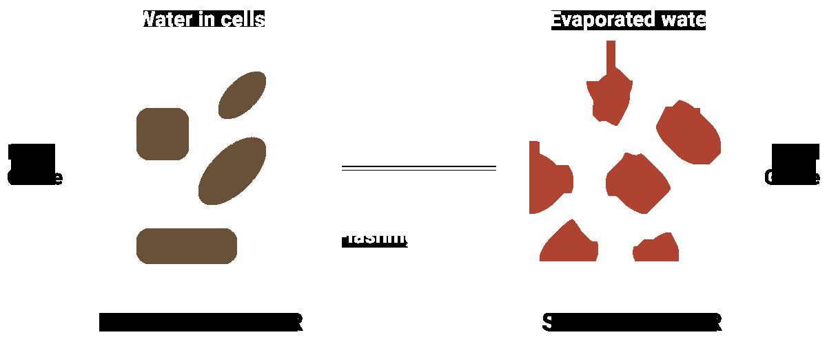 FiberScheme-2.png
