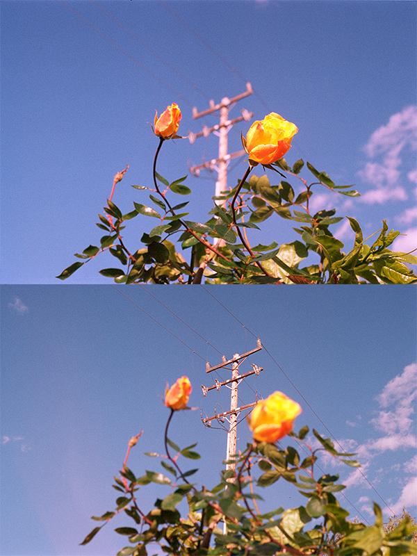 flower website piece.png