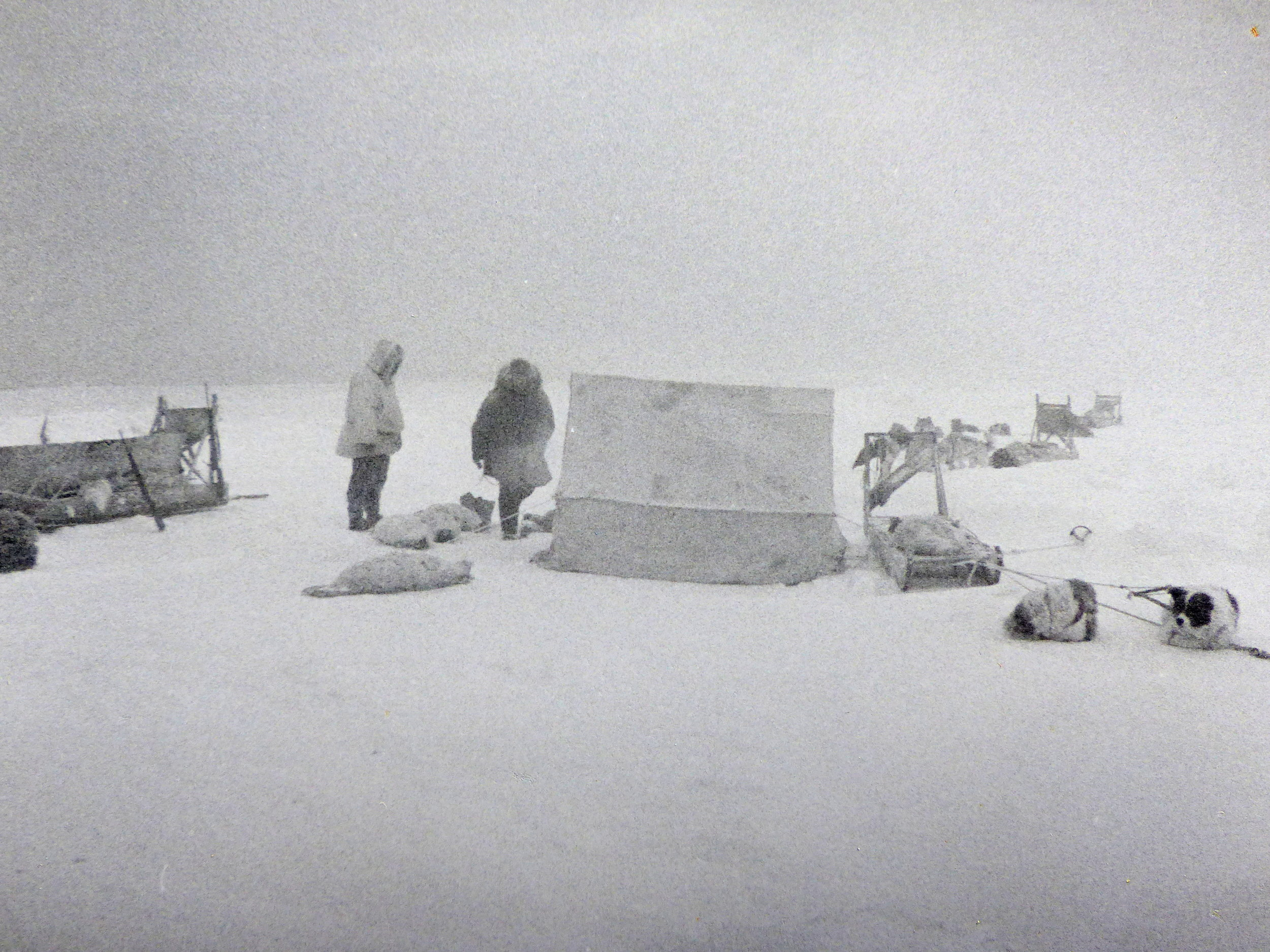Inupiaq seal hunters with dog teams and a warming tent on the sea ice offshore from Wainwright, on the Arctic Slope (1965 photo).