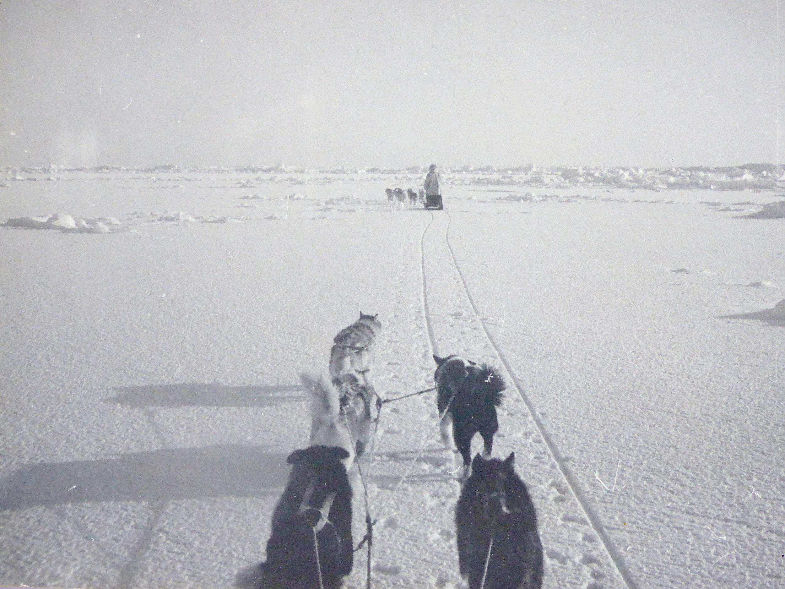 Inupiaq seal hunters traveling on the sea ice near Wainwright, on the Arctic Coast of Alaska (1965 photo).