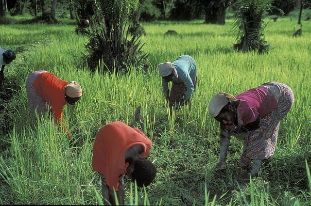 Women are an important part of Ghana's agricultural sector (Image source: World Bank)