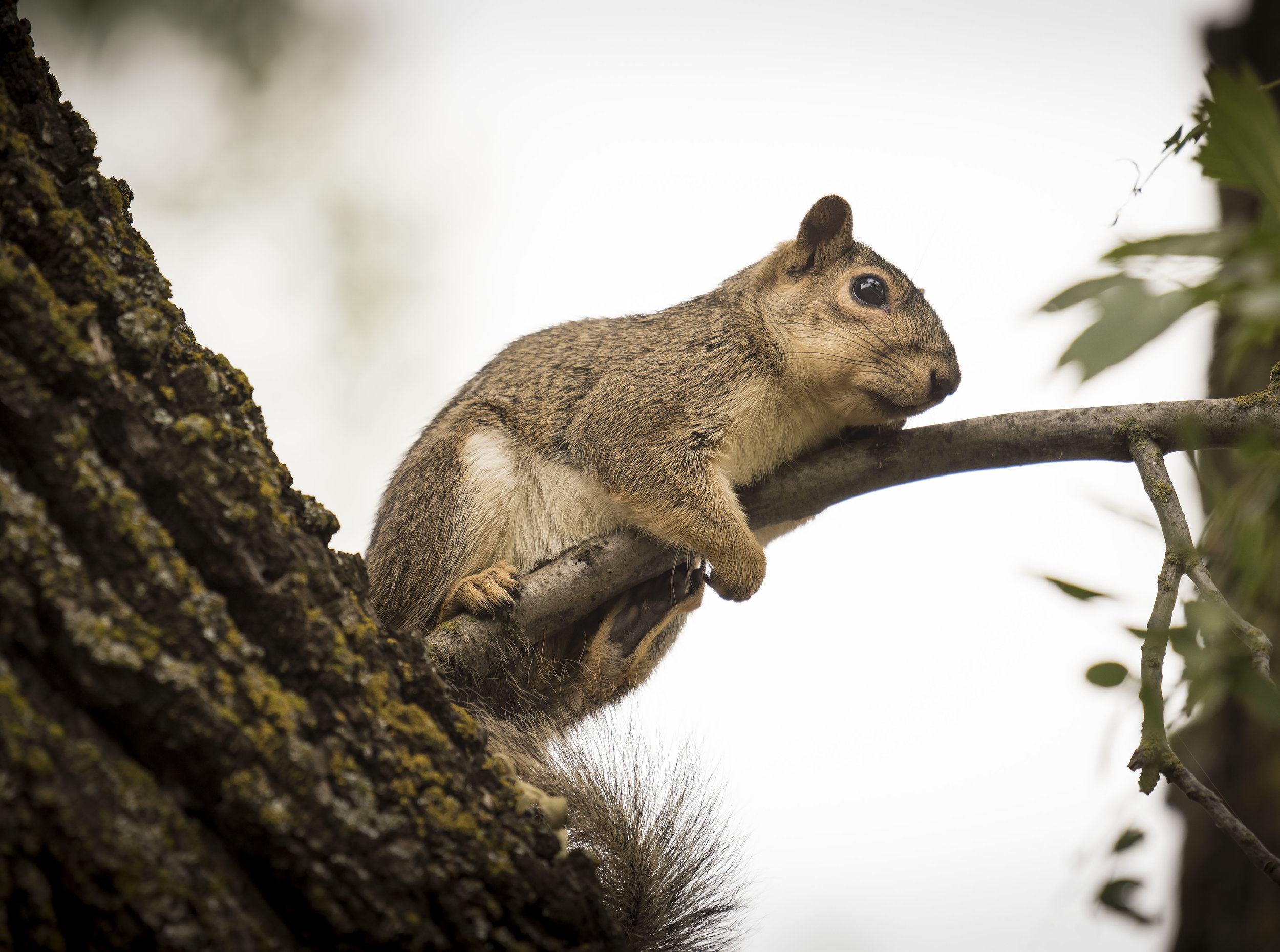 Squirrel clasping a tree branch