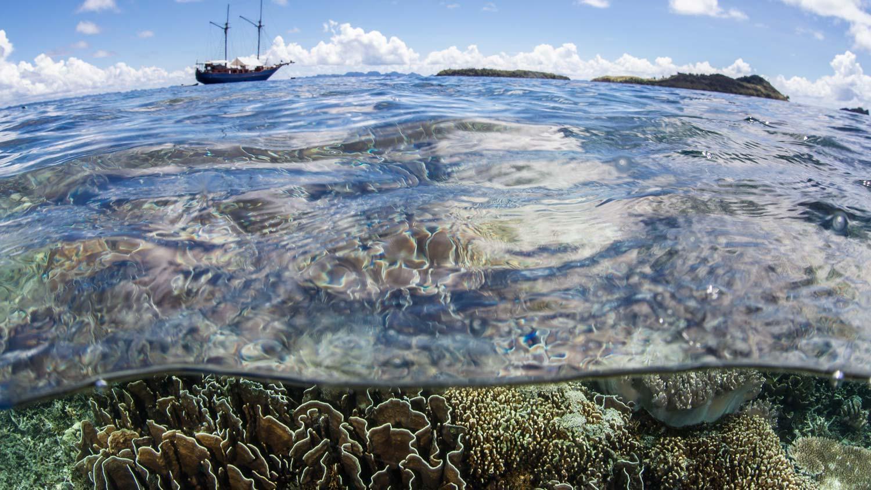 diverse-coral-reef-raja-ampat.jpg