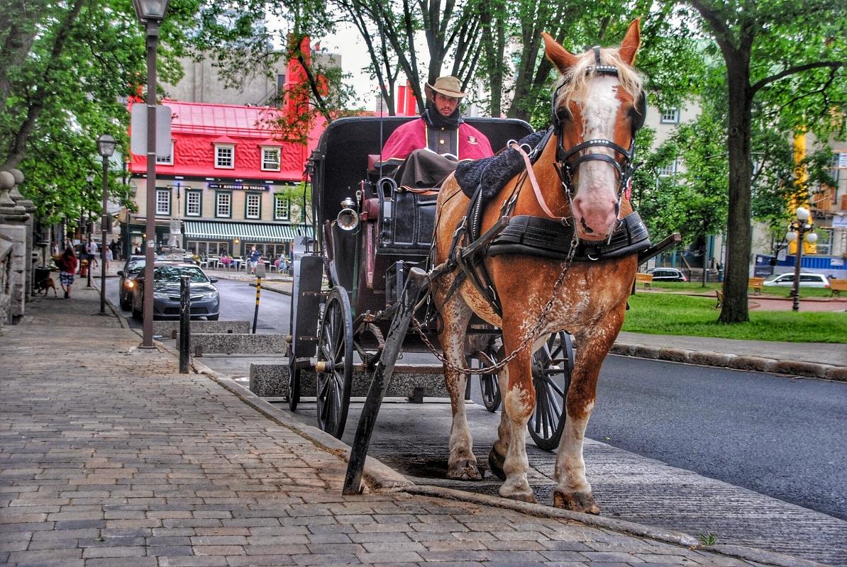 quebec city kids carriage.JPG