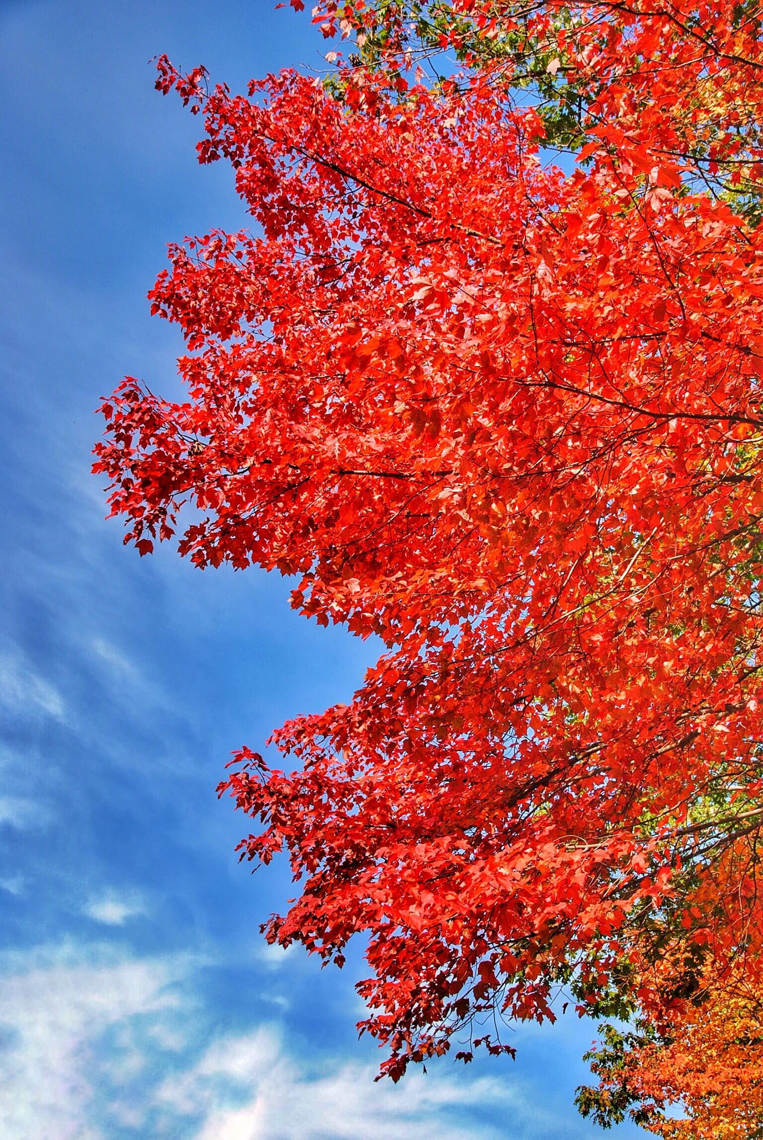 Kancamagus Highway Tree.JPG