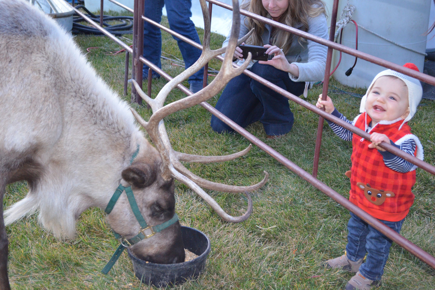 little-boy-looking-at-reindeer.jpg