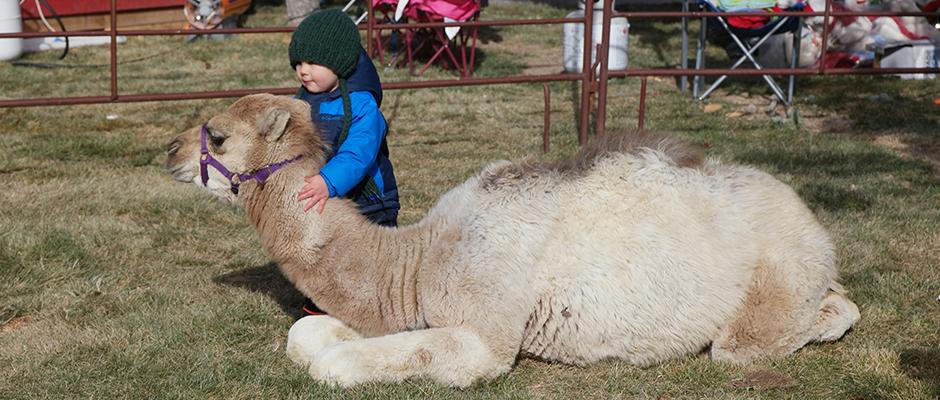 christkindlmarkt-boy-with-camel.jpg
