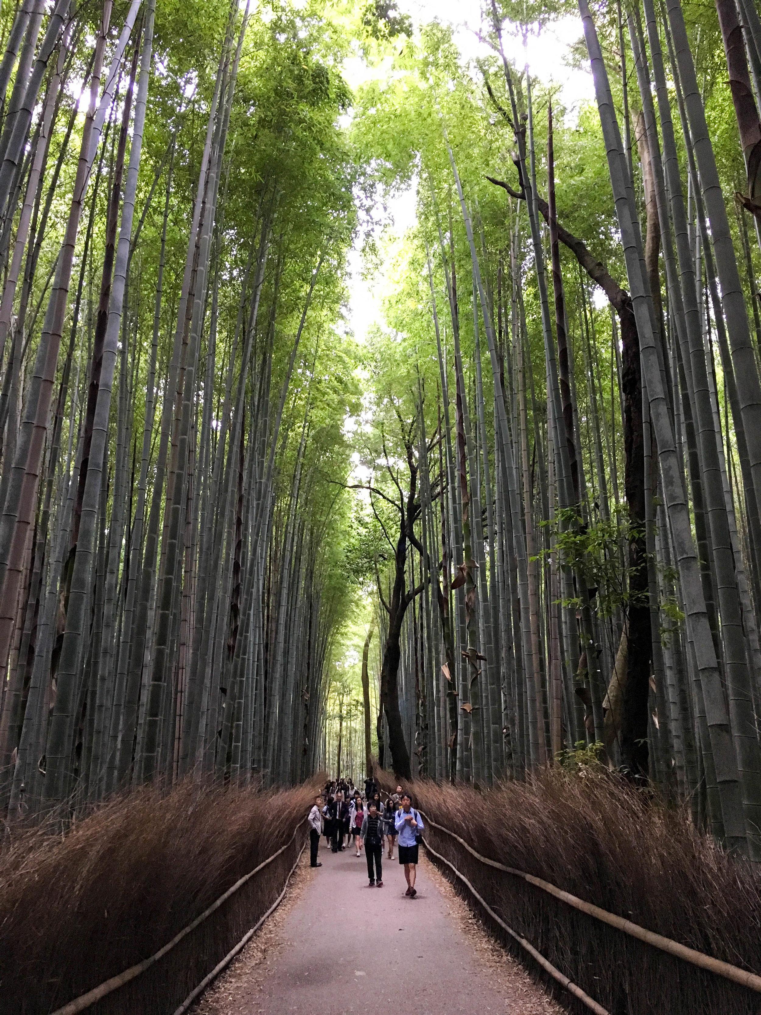 竹子的森林