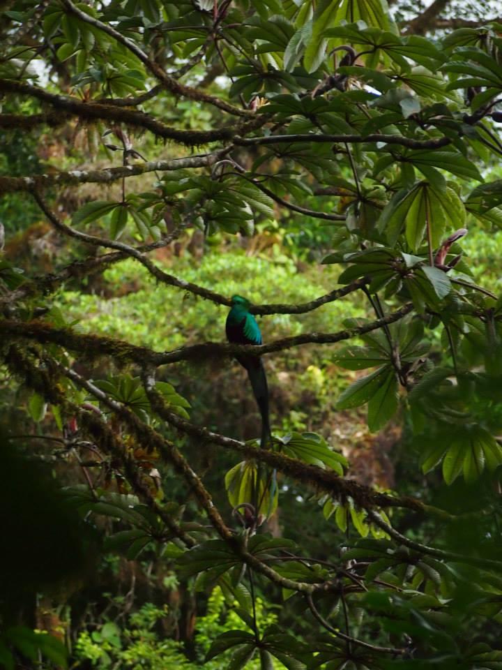 哥斯达黎加的游客选择了加州海岸的森林