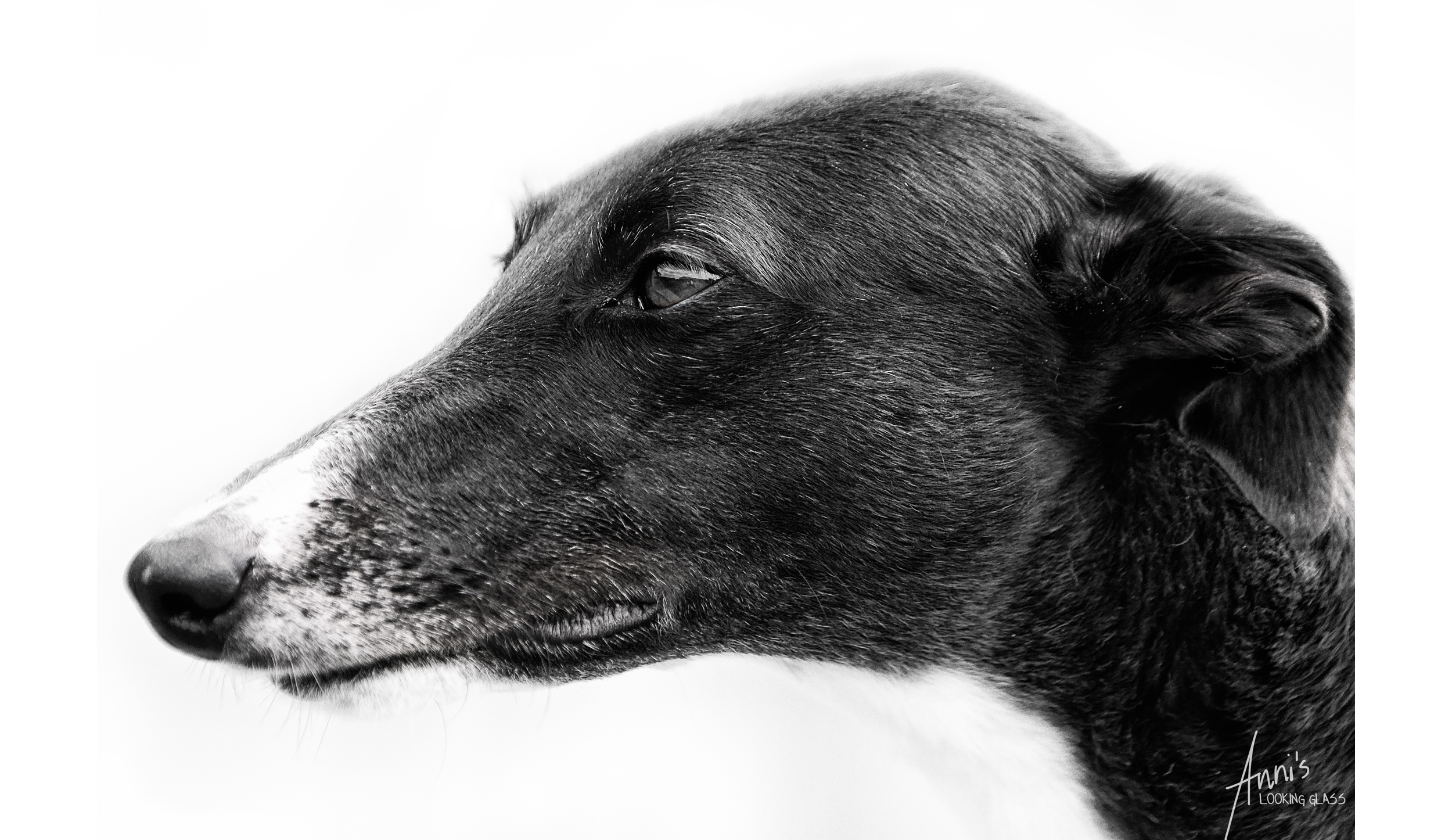 Seriously, Melena should be a canine model! Such a photogenic girl.