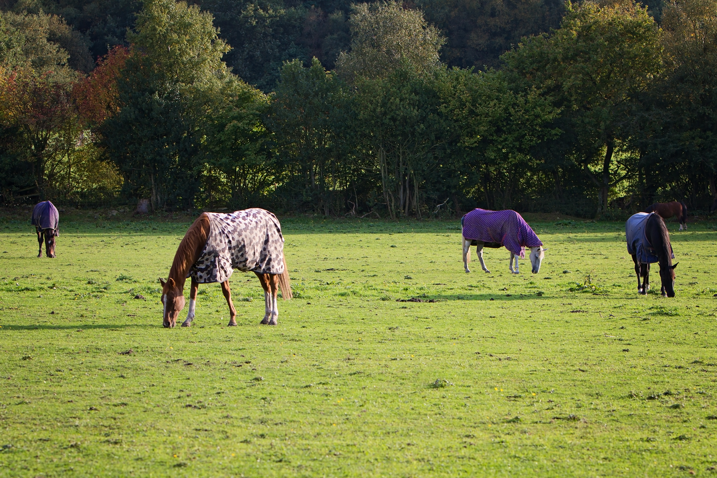 Rugs as far as the eye can see: Peer pressure is the most common reason for horse owners to purchase a rug .
