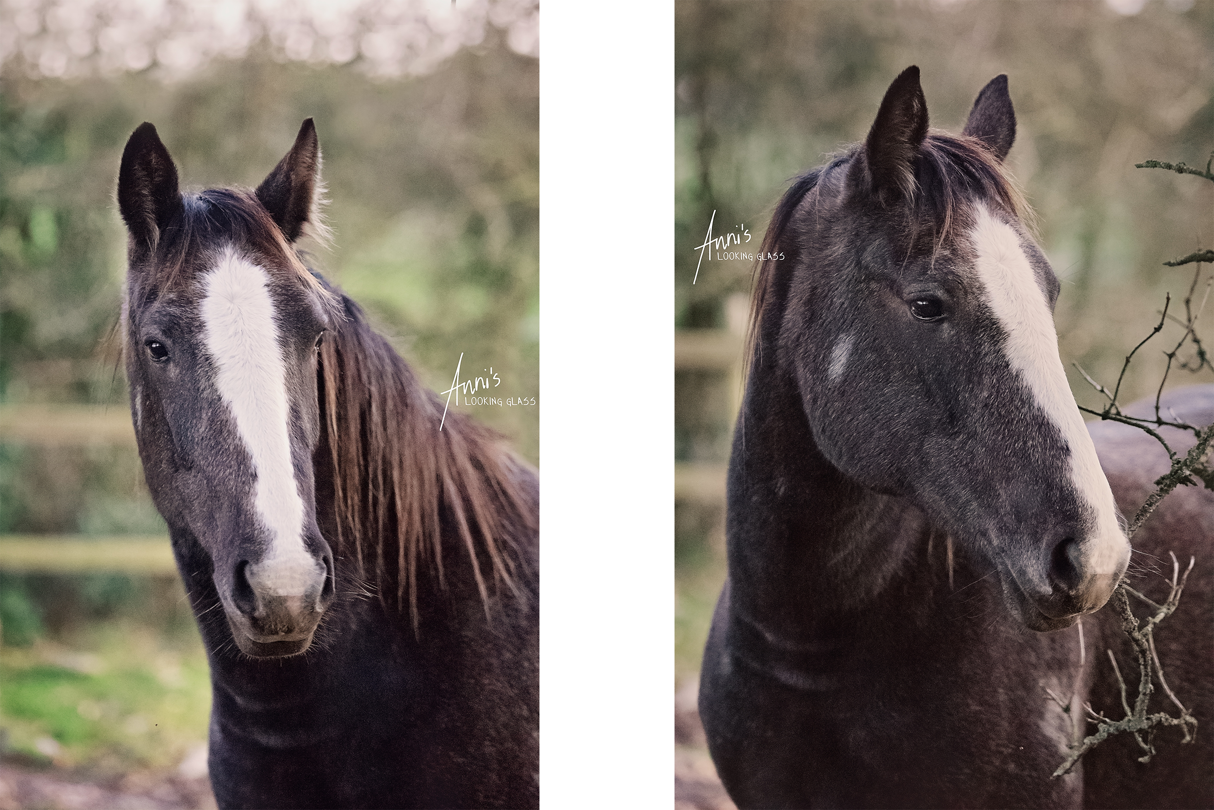 Sometimes I am so busy photographing other people and their animals that I don't capture my own little one growing up.