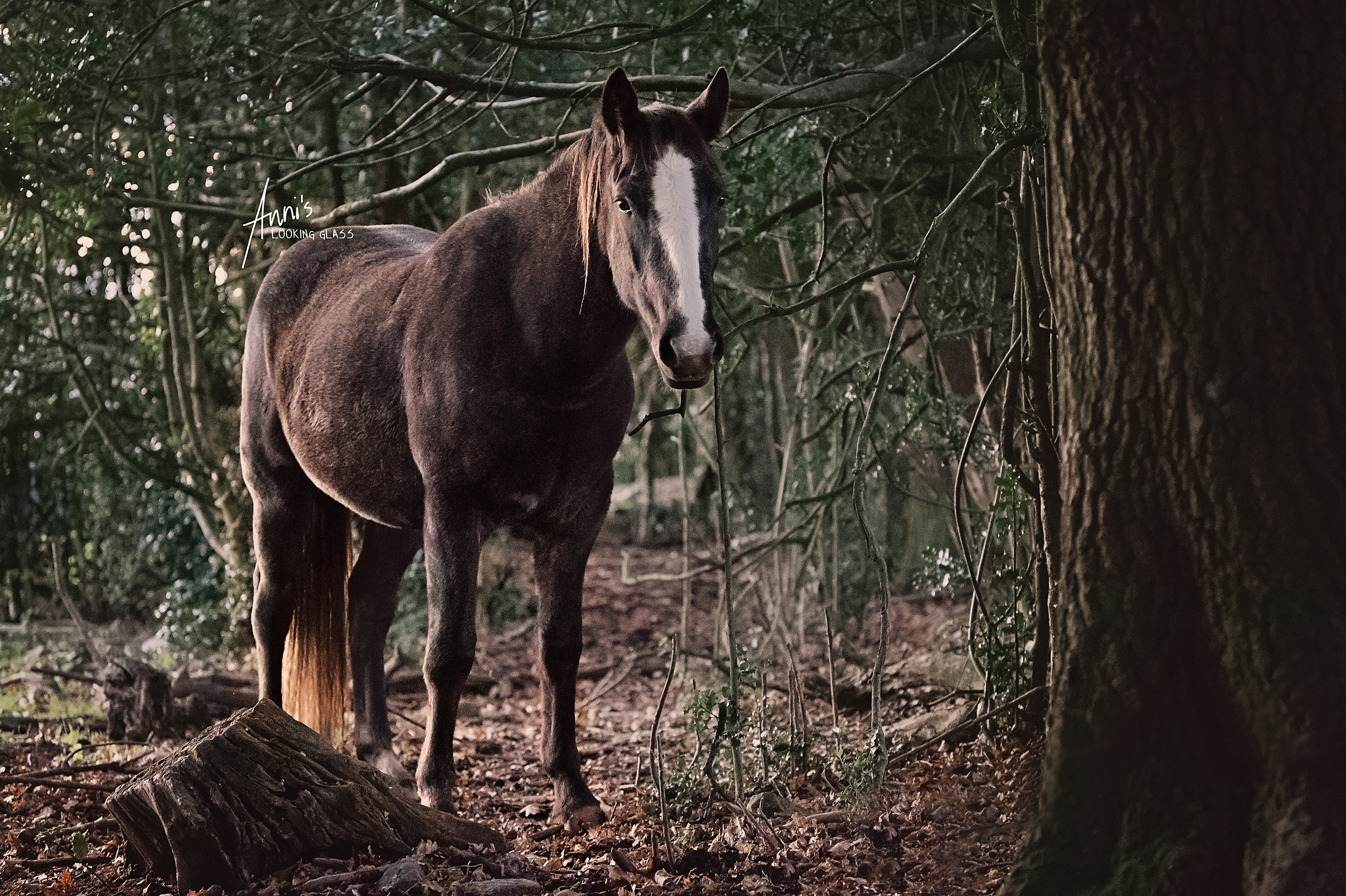 A brown horse with a big white blaze standing in the woods