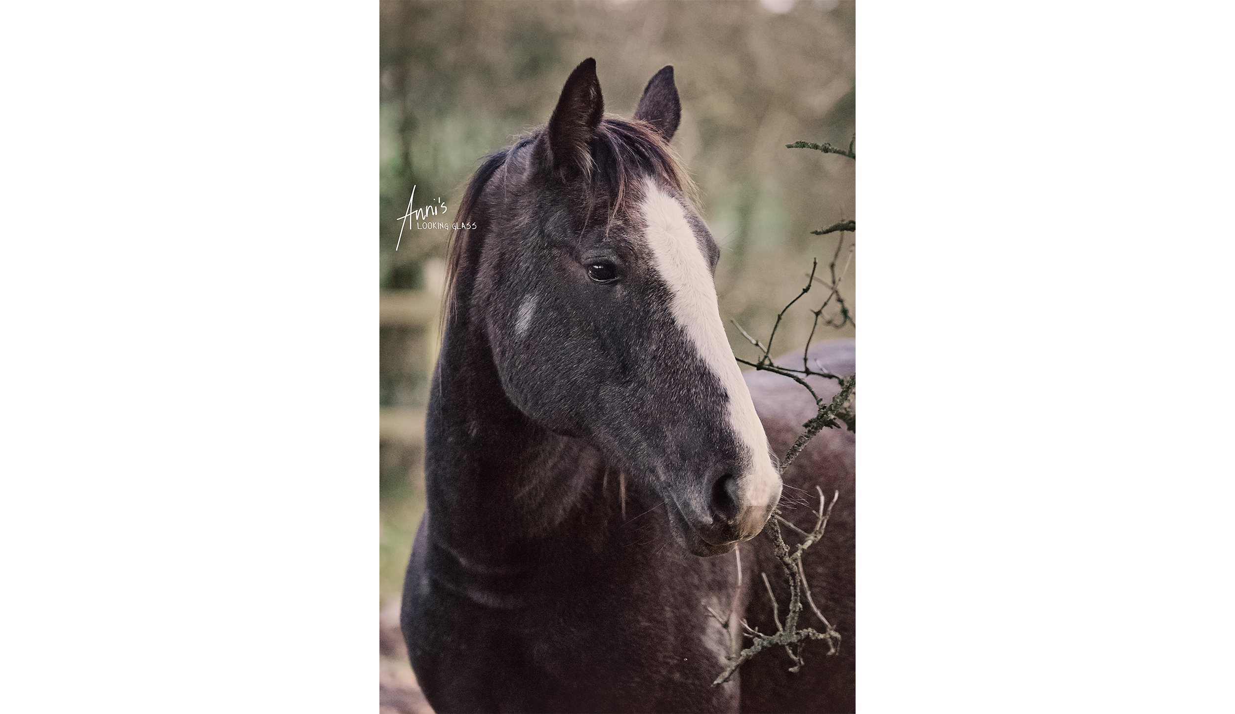 The top spot - of course - goes to the most photographed horse on Earth: My baby, Vanity.